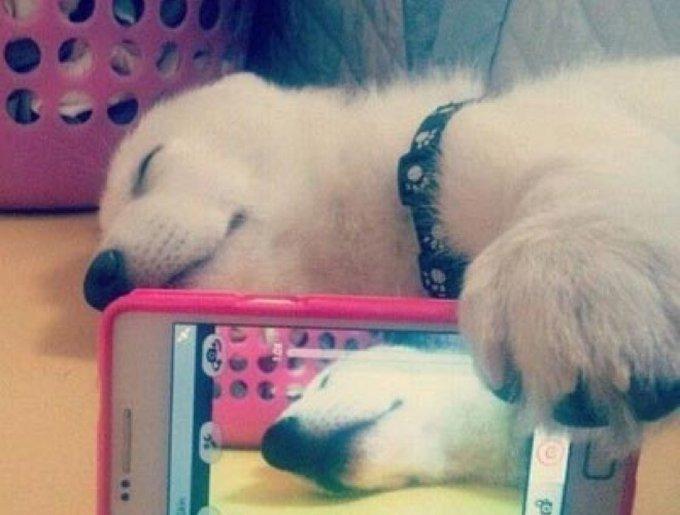 blog_yummypets_selfie_chien1_09_01_14