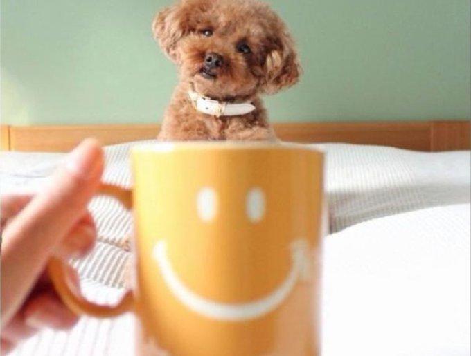 blog_yummypets_chien_mug2_02_14