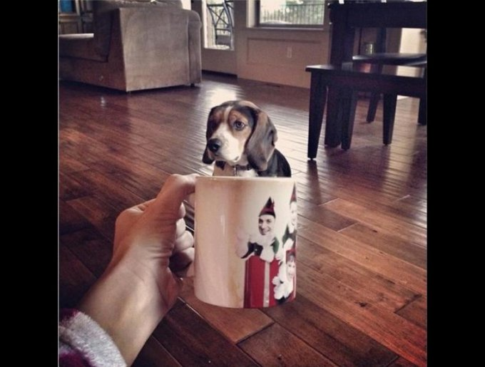 blog_yummypets_chien_mug3_02_14