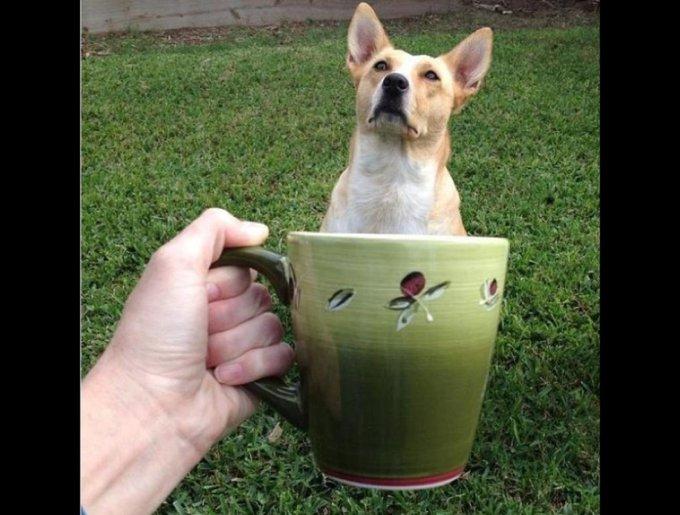 blog_yummypets_chien_mug5_02_14