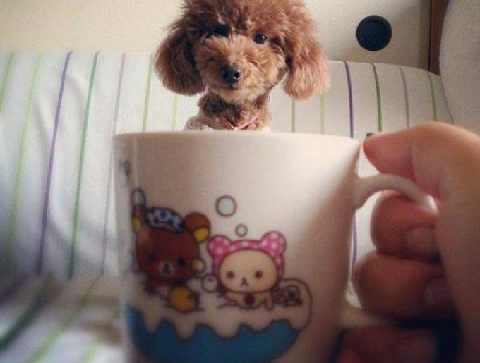 blog_yummypets_chien_mug6_02_14