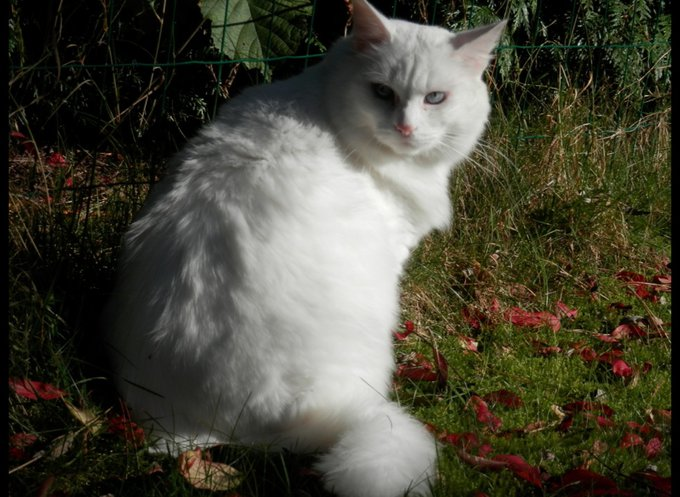 blog_yummypets_interview_lilou_chatte_02_2014