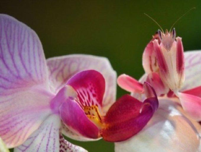 blog_yummypets_mante_orchidee_02_14