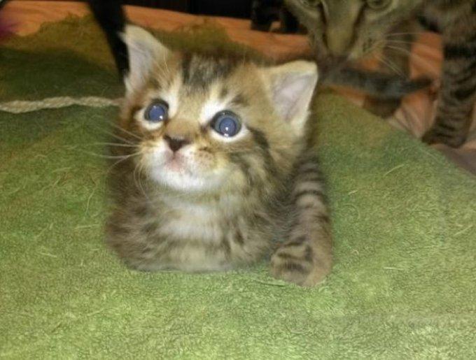 Mercury, un chat attentif