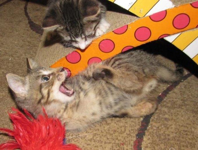 Mercury jouant avec son copain