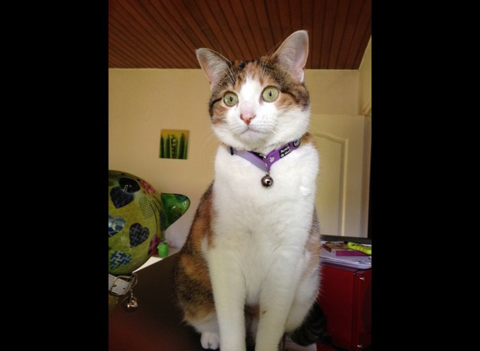 blog_yummypets_rencontre_canaille_02_2014