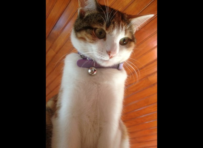 blog_yummypets_rencontre_canaille_02_2014_4