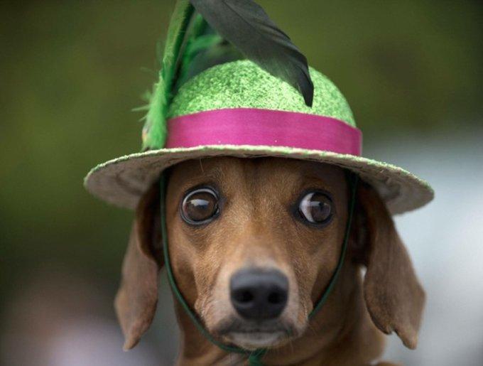 blog_yummypets_rio_dogs2_02_14