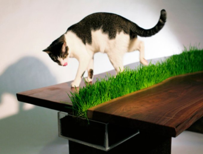 blog_yummypets_table_herbe_chats_02_14