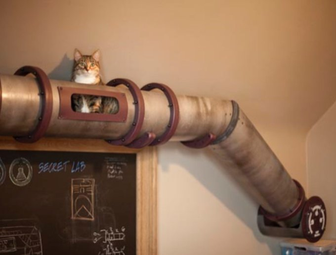 blog_yummypets_tunnel_chats_02_14
