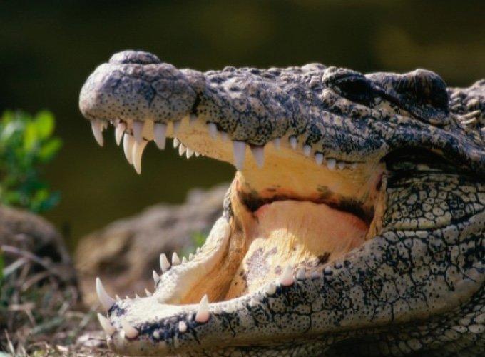 Top 10 des animaux les plus dangereux pour l'homme