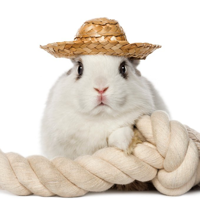 Rabbit Rope