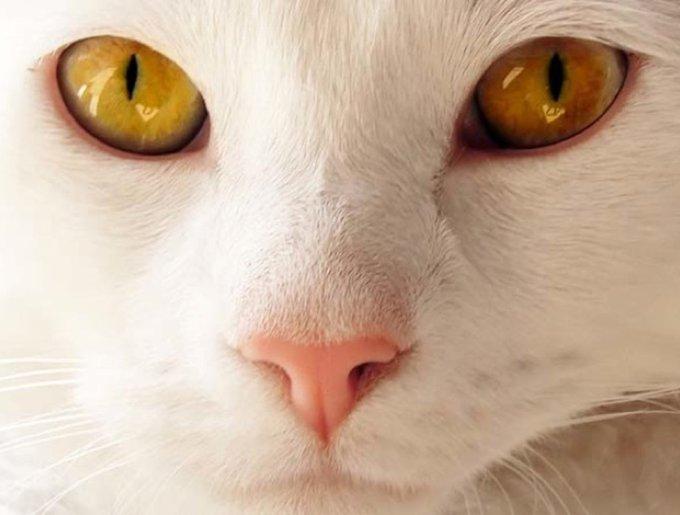 blog_yummypets_animaux17_03_14