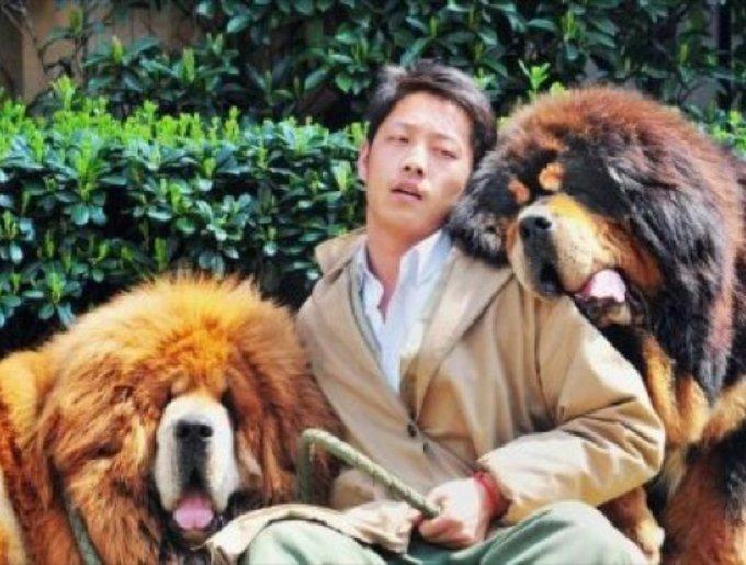 blog_yummypets_astiff_tibetain2_03_14