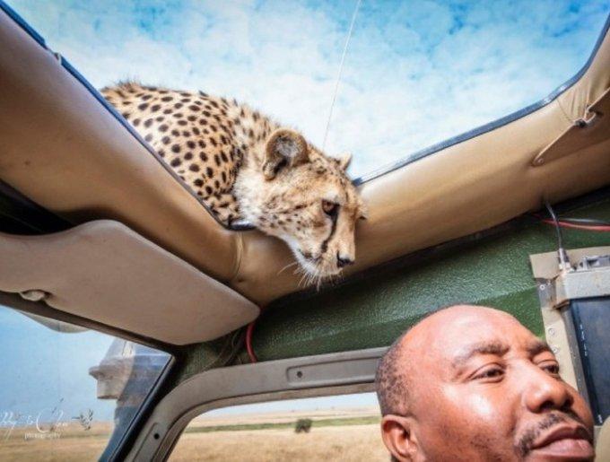 blog_yummypets_cheetah1_03_14