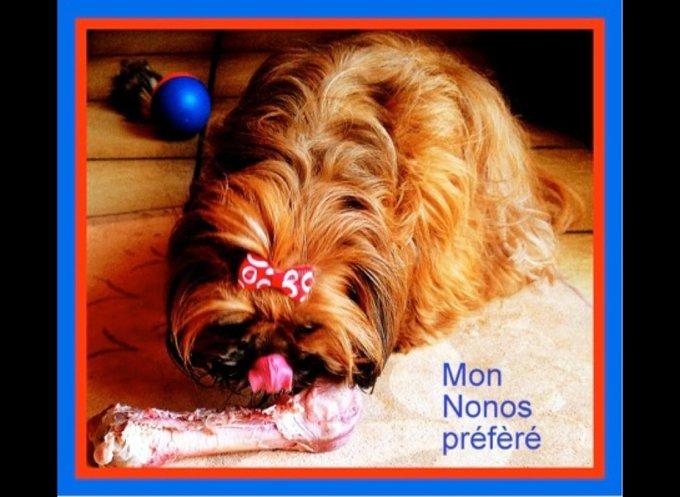 blog_yummypets_jeuconcours_03_2014_2