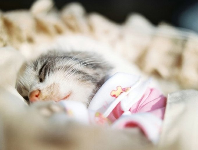 blog_yummypets_pets_deceased1_03_14