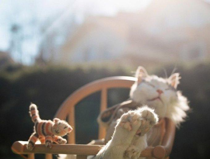 blog_yummypets_pets_deceased3_03_14.jpg