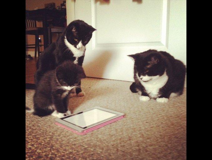 blog_yummypets_tuxedo_cats10_03_14