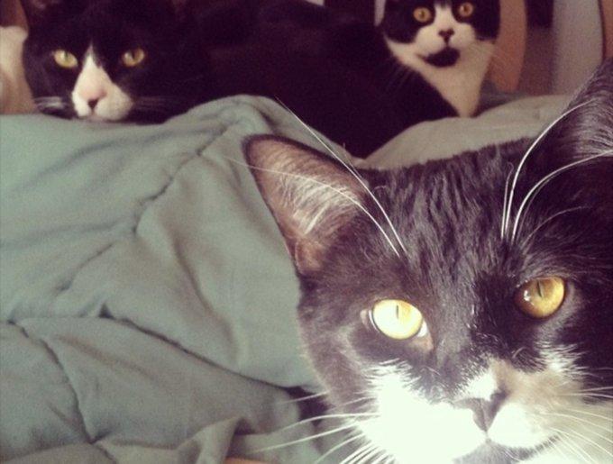 blog_yummypets_tuxedo_cats11_03_14