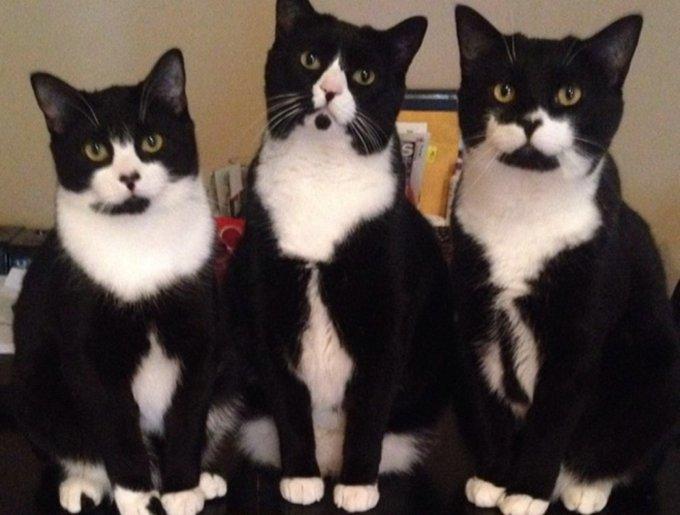 blog_yummypets_tuxedo_cats1_03_14