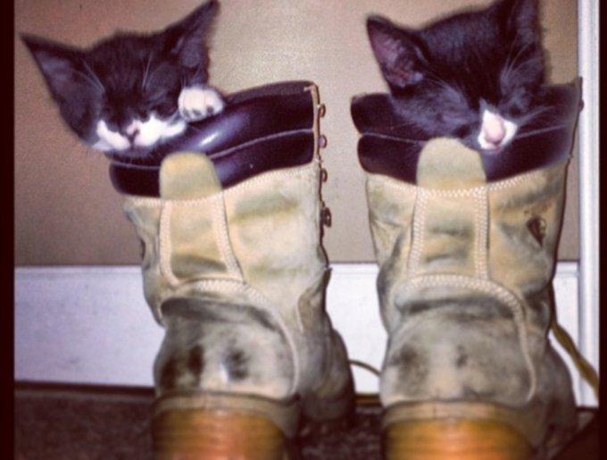 blog_yummypets_tuxedo_cats2_03_14