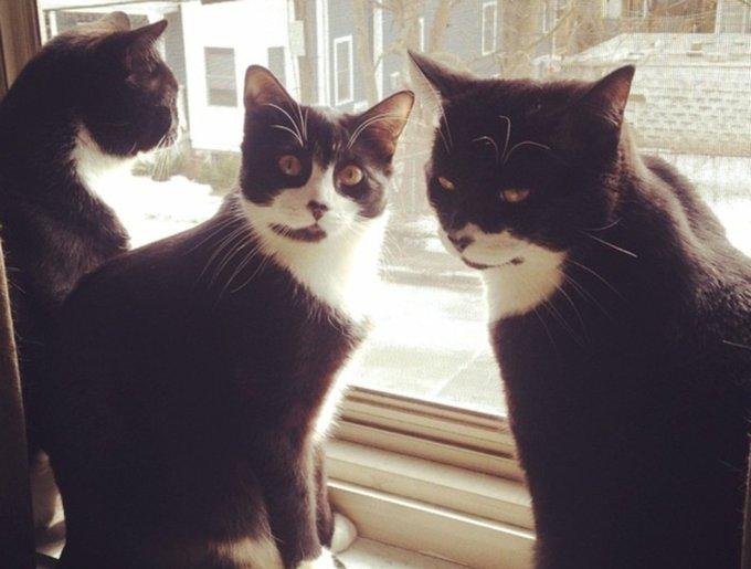 blog_yummypets_tuxedo_cats3_03_14