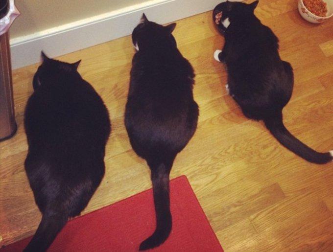 blog_yummypets_tuxedo_cats4_03_14