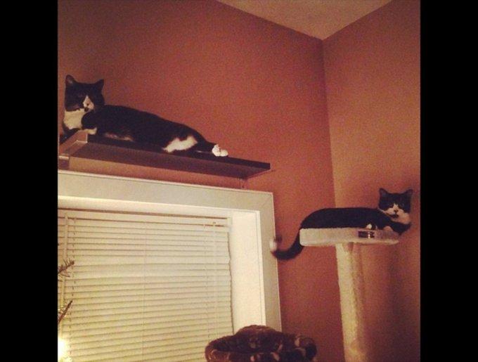 blog_yummypets_tuxedo_cats5_03_14