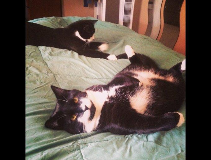 blog_yummypets_tuxedo_cats6_03_14