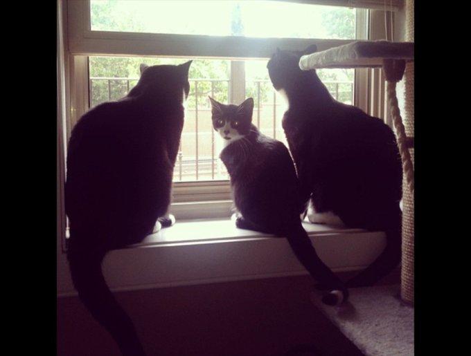 blog_yummypets_tuxedo_cats7_03_14