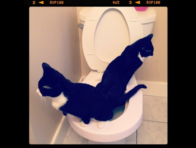 blog_yummypets_tuxedo_cats8_03_14