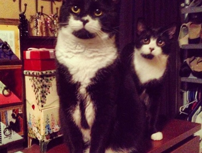 blog_yummypets_tuxedo_cats9_03_14