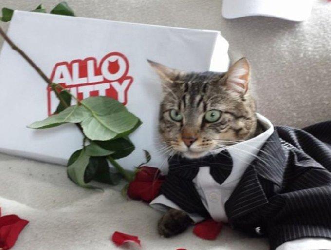Allo Kitty : faites vous livrer un chat pour conclure... ou pas !