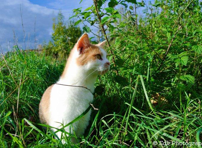 Le chat Calin