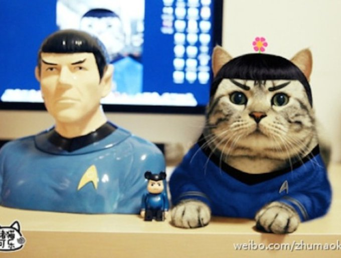 blog_yummypets_chat_cosplay2_04_14