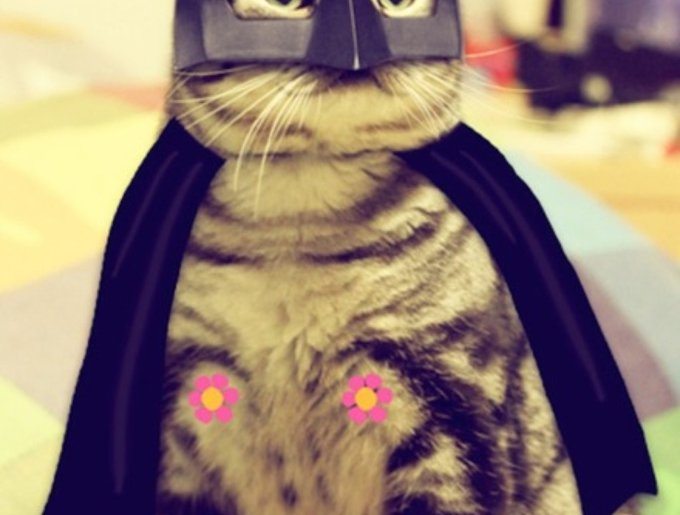 blog_yummypets_chat_cosplay3_04_14