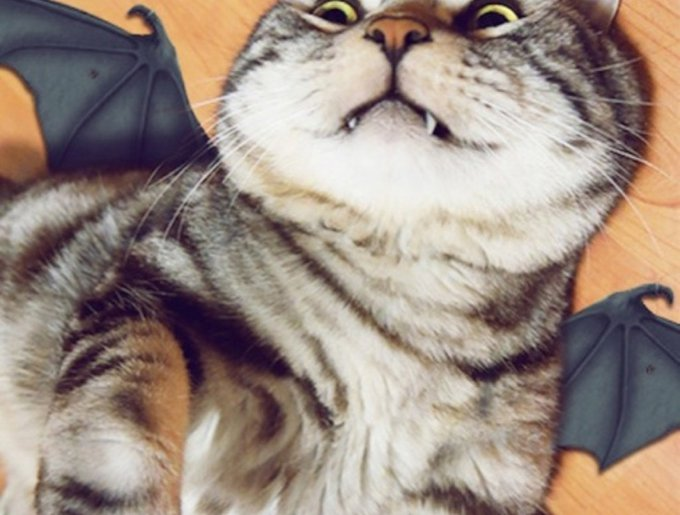 blog_yummypets_chat_cosplay6_04_14