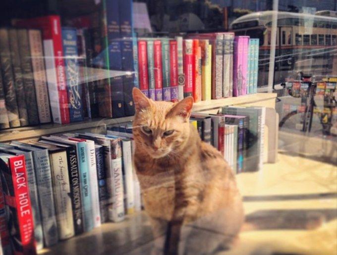 blog_yummypets_chats_bookstore11_04_14