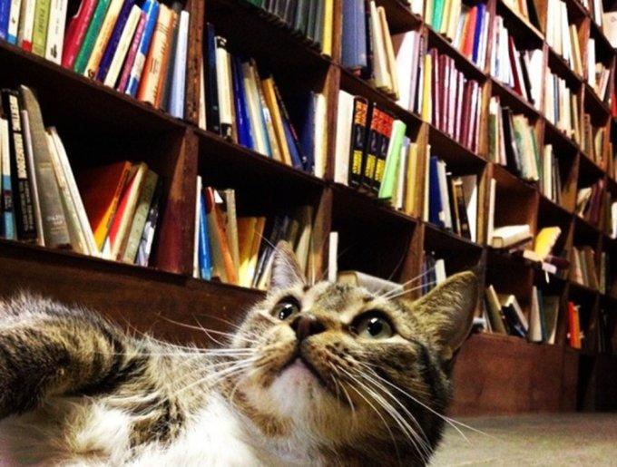 blog_yummypets_chats_bookstore12_04_14
