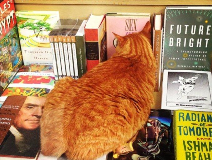 blog_yummypets_chats_bookstore13_04_14