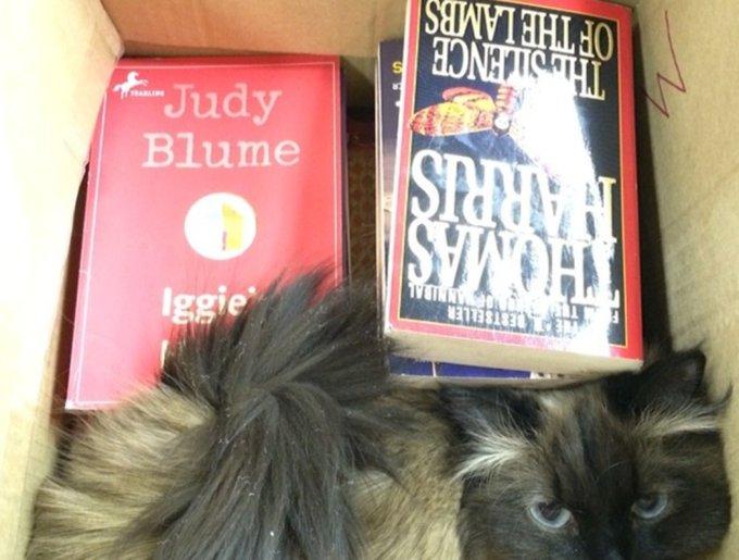 blog_yummypets_chats_bookstore14_04_14