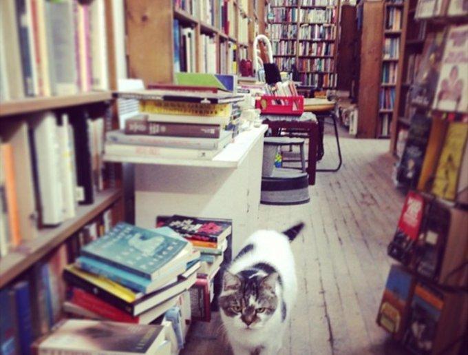 blog_yummypets_chats_bookstore16_04_14