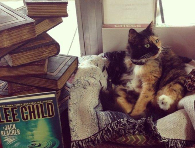 blog_yummypets_chats_bookstore17_04_14
