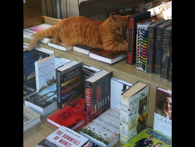 blog_yummypets_chats_bookstore18_04_14