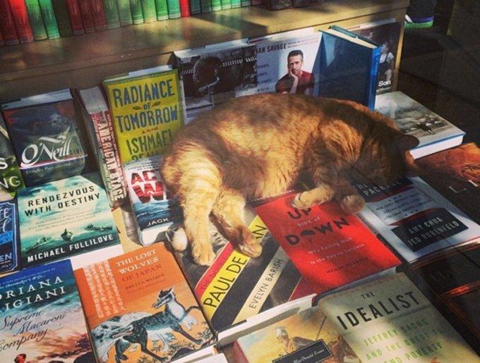 blog_yummypets_chats_bookstore2_04_14