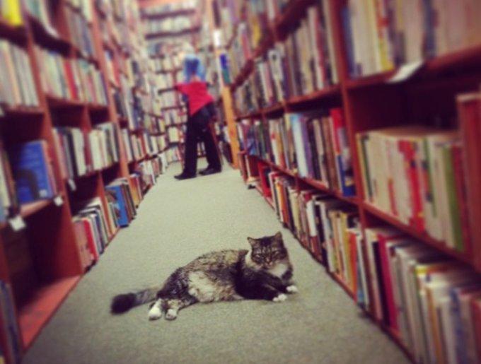 blog_yummypets_chats_bookstore3_04_14