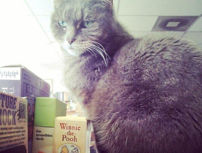 blog_yummypets_chats_bookstore5_04_14