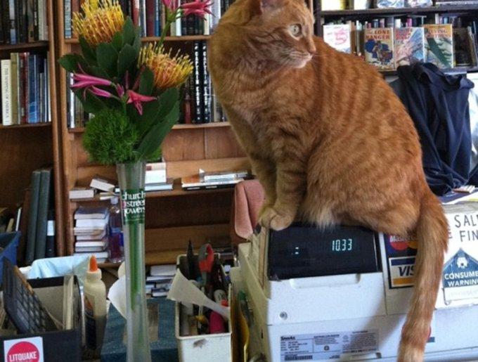 blog_yummypets_chats_bookstore6_04_14