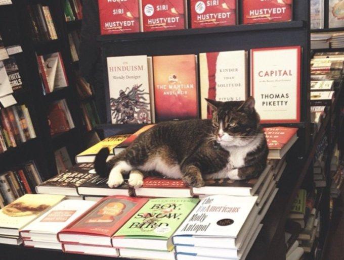 blog_yummypets_chats_bookstore8_04_14